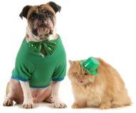 Perro y gato del día de los patricks del St Fotografía de archivo