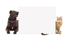 Perro y gato detrás de una bandera Imagen de archivo libre de regalías