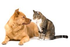 Perro y gato en el fondo blanco Foto de archivo libre de regalías