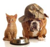 Perro y gato en el plato del alimento Fotografía de archivo