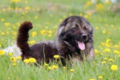 Perro y gato en flores Imágenes de archivo libres de regalías