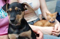 Perro y gato en manos de los amigos Fotos de archivo libres de regalías