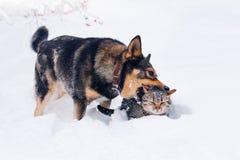 Perro y gato en nieve Foto de archivo