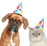 Perro y gato en sombrero del partido Fotos de archivo libres de regalías