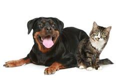 Perro y gato en un fondo blanco Fotografía de archivo