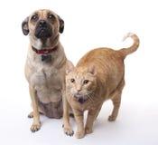 Perro y gato junto Fotos de archivo