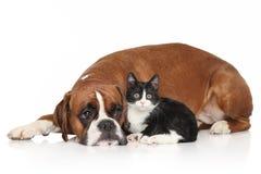 Perro y gato junto en el fondo blanco Fotos de archivo