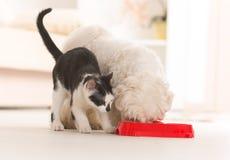 Perro y gato que comen la comida de un cuenco Imágenes de archivo libres de regalías