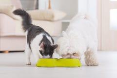 Perro y gato que comen la comida de un cuenco Foto de archivo libre de regalías