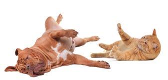 Perro y gato que juegan el torneado upside-down Imágenes de archivo libres de regalías