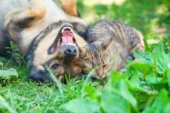 Perro y gato que juegan junto fotos de archivo