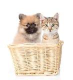 perro y gato que se sientan en una cesta Aislado en el fondo blanco Fotografía de archivo libre de regalías