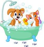 Perro y gato que tienen un baño Foto de archivo