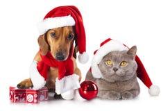 Perro y gato y kitens un sombrero de santa Fotos de archivo