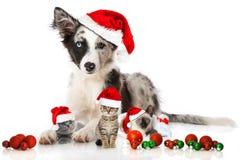 Perro y gatos de la Navidad fotos de archivo libres de regalías