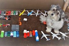 Perro y juguetes de Havanese fotos de archivo libres de regalías