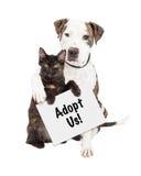 Perro y Kitten Adopt Us Sign Foto de archivo libre de regalías