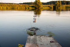 Perro y lago fotografía de archivo