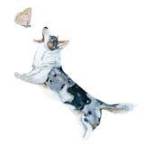 Perro y mariposa Foto de archivo libre de regalías