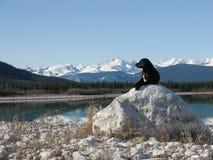 Perro y montañas foto de archivo