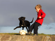 Perro y muchacho del fútbol Fotos de archivo libres de regalías