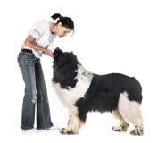 Perro y mujer de Terranova imagen de archivo libre de regalías