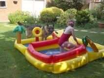 Perro y niño que juegan en agua imágenes de archivo libres de regalías