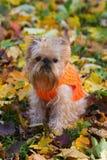 Perro y otoño. Fotografía de archivo libre de regalías