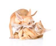 Perro y pelea de gatos En el fondo blanco Foto de archivo
