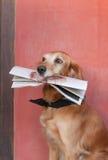Perro y periódico imagen de archivo