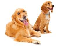 Perro y perrito Fotografía de archivo libre de regalías