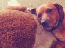 Perro y perro relleno Imagen de archivo libre de regalías