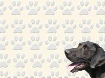 Perro y pistas stock de ilustración