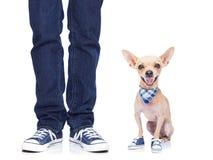 Perro y propietario Fotos de archivo libres de regalías