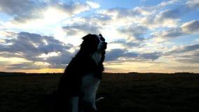 Perro y puesta del sol Imagen de archivo libre de regalías