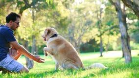 Perro y su dueño en el parque metrajes