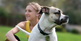 Perro y su muchacha Imágenes de archivo libres de regalías