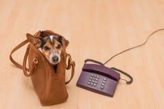 Perro y teléfono listos para la comunicación foto de archivo libre de regalías
