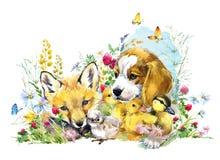Perro zorro Anadón Pollo colección del animal de los campos de la acuarela stock de ilustración