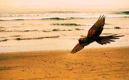 Perroquet à la plage photo stock