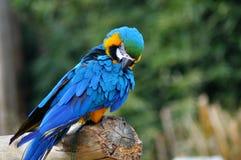 Perroquet Images libres de droits