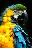 Perroquet Photographie stock