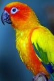 Perroquet images stock