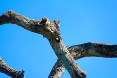 Perroquet avec l'endroit Image libre de droits