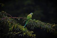 Perroquet avec la belle composition en couleur photos libres de droits