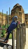 Perroquet bleu Photos stock