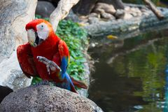 Perroquet bonjour Photo stock
