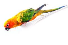 Perroquet coloré Photos stock