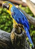 Perroquet coloré Image libre de droits