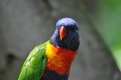 Perroquet coloré Photographie stock